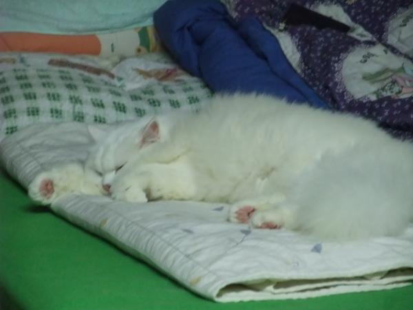 這就是我們家的貓老大
