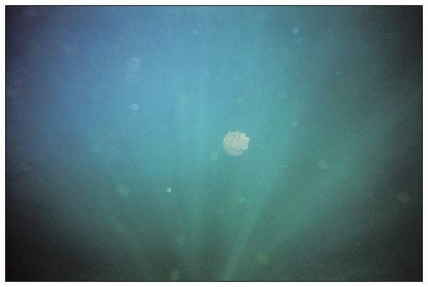 980413帛琉水母湖_05.jpg
