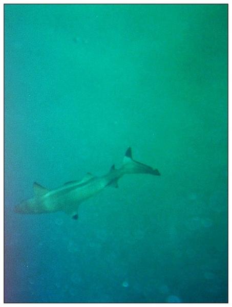 980413帛琉鯊魚城_01.jpg