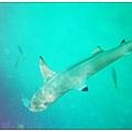 980413帛琉鯊魚城_03.jpg