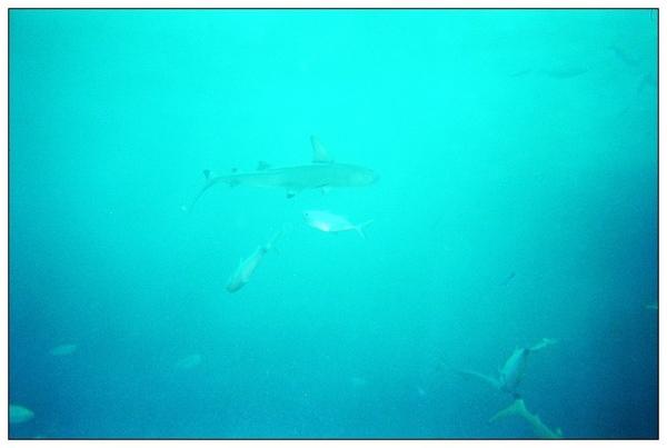 980413帛琉鯊魚城_04.jpg