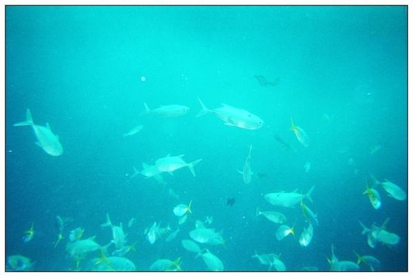 980413帛琉鯊魚城_06.jpg