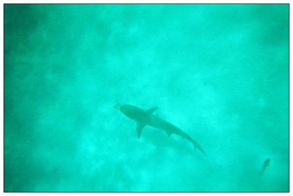 980413帛琉鯊魚城_07.jpg