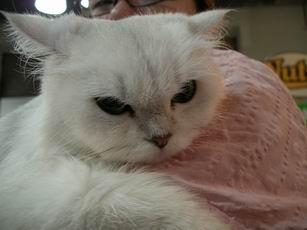 cat0003.JPG