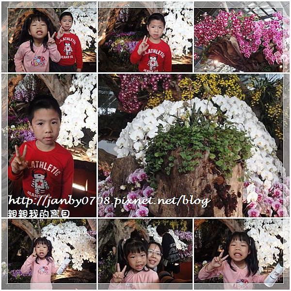 flower-5