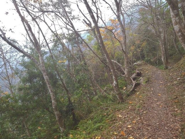 瓦拉米步道28