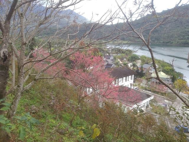 玉神櫻花8