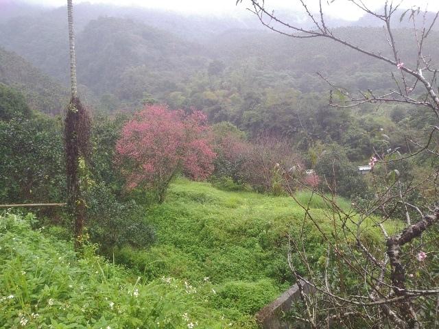 樹湖櫻花&瀑布10