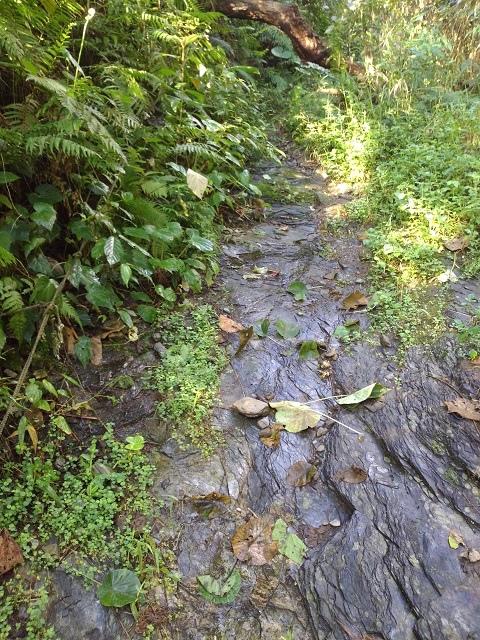 樹湖櫻花&瀑布19