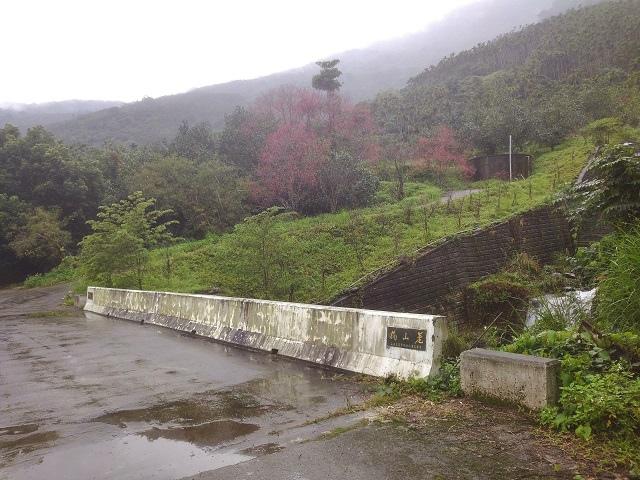 樹湖櫻花&瀑布23