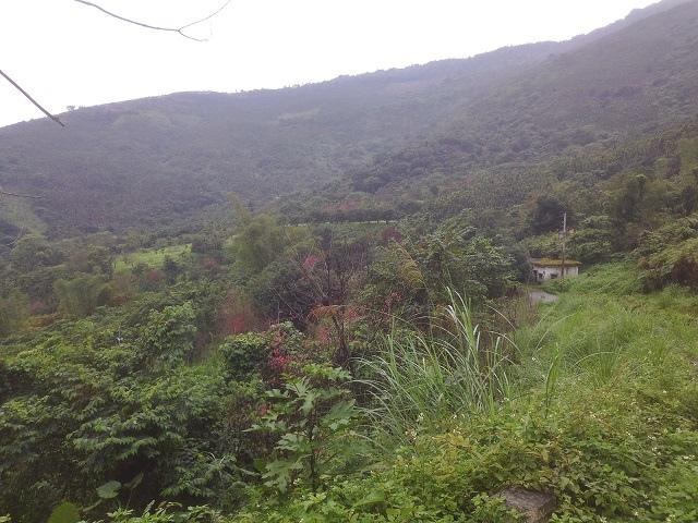 樹湖櫻花&瀑布24