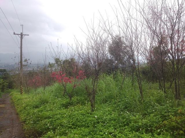 樹湖櫻花&瀑布25