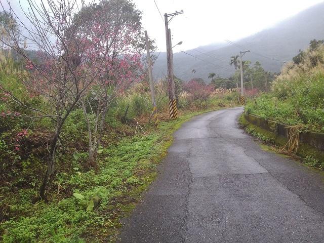 樹湖櫻花&瀑布32