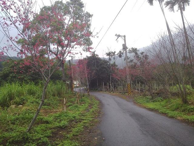 樹湖櫻花&瀑布33
