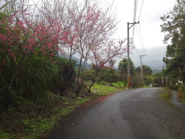 樹湖櫻花&瀑布35