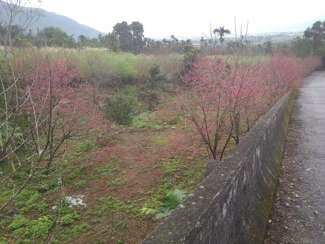 樹湖櫻花&瀑布40