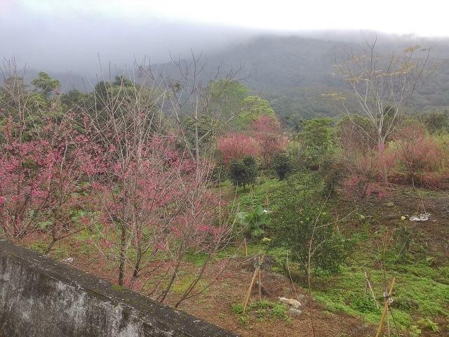 樹湖櫻花&瀑布42