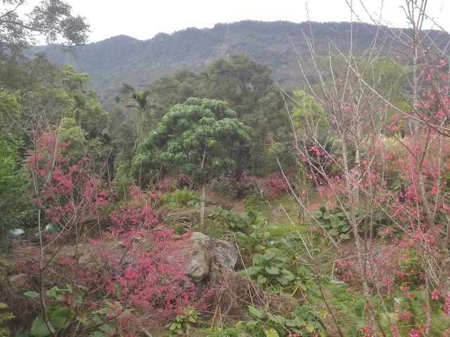 樹湖櫻花&瀑布49