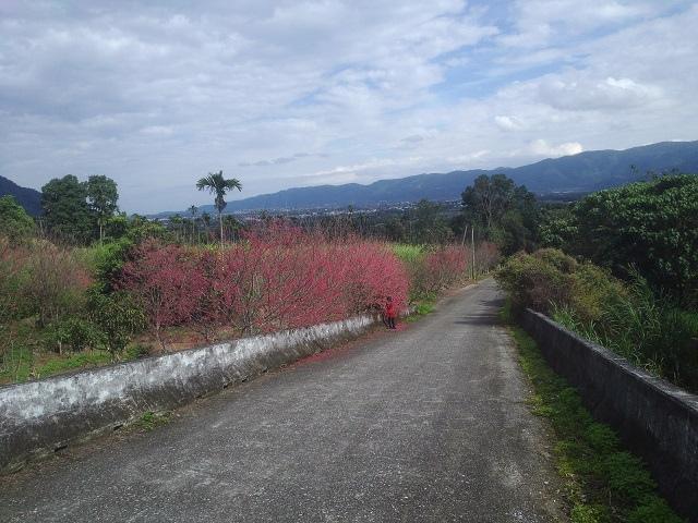 樹湖櫻花&瀑布50