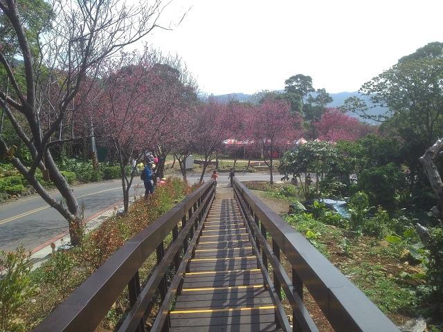 20150216櫻花隧道10