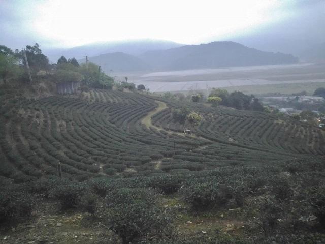 玉蘭茶園5