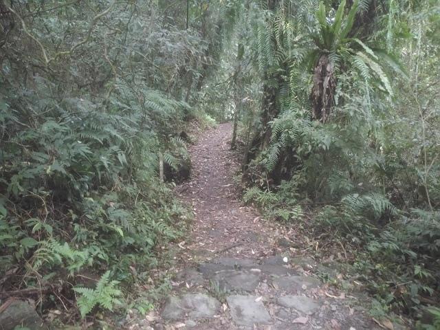 松羅步道25