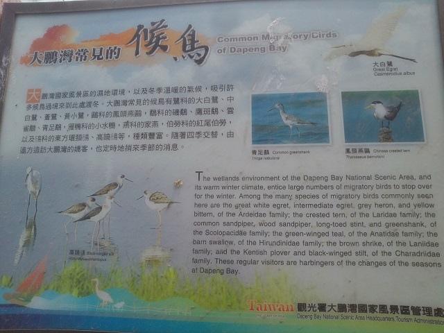 嘉蓮濕地公園15