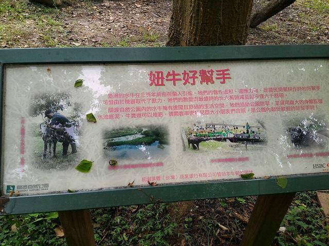 關渡自然公園3