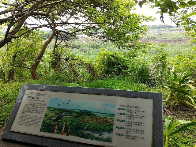 關渡自然公園5