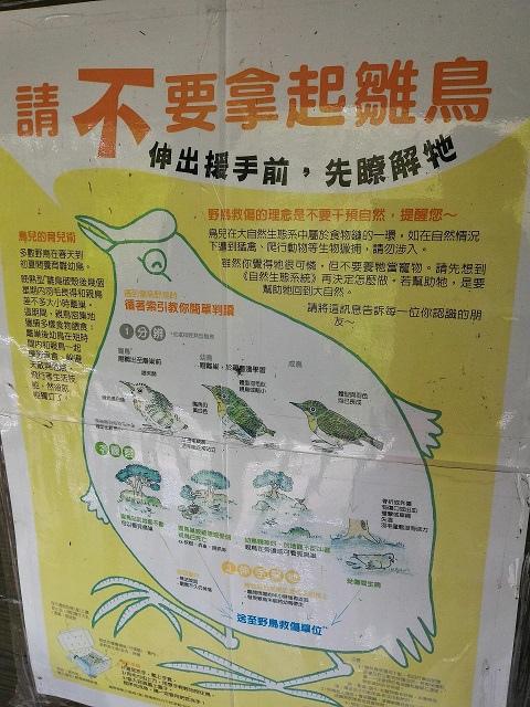 關渡自然公園15