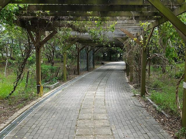 關渡自然公園17