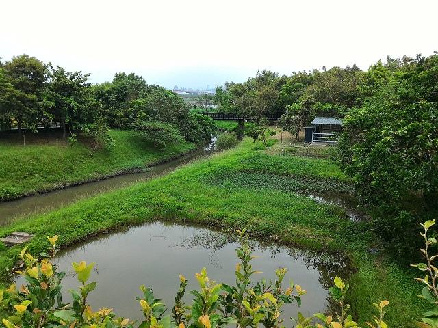 關渡自然公園29