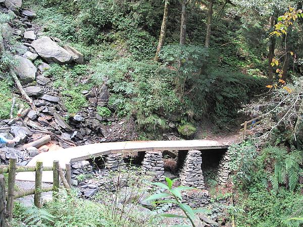 原始的森林步道