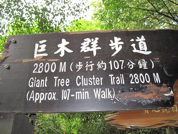 巨木群步道