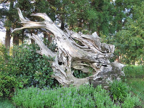 巧奪天工的漂流木造景