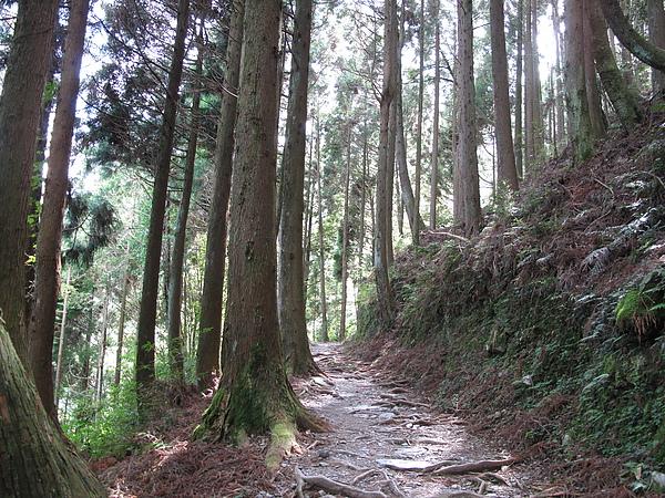 森林步道沿途