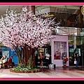 好美的櫻花樹!