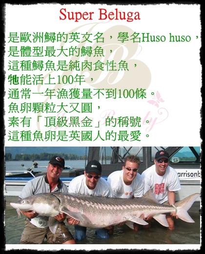魚14.jpg