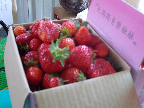 大大顆的草莓