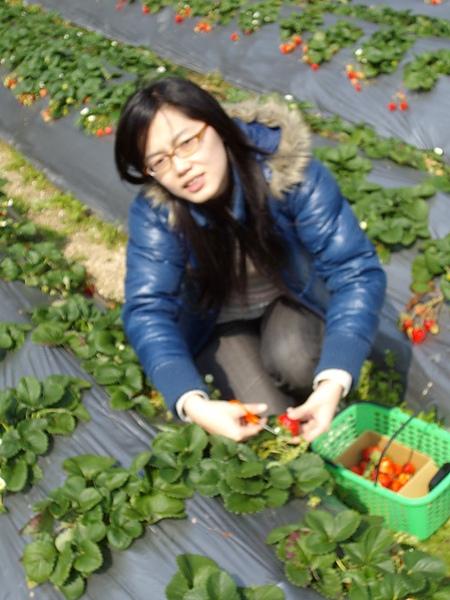 快睡著的Jane與草莓