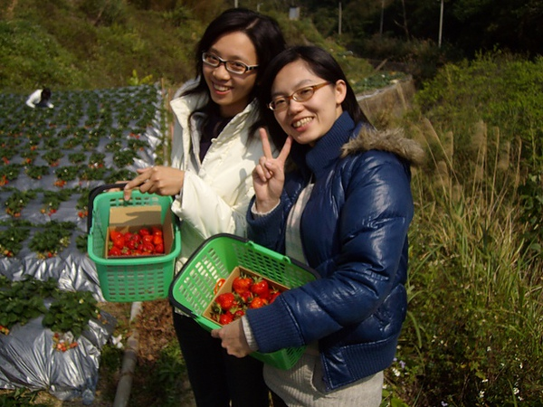 採草莓姊妹花