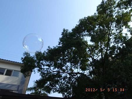 20120505土城桐花節&阿愷1歲生日45
