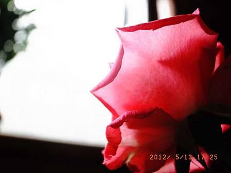 20120513有阿愷的母親節48