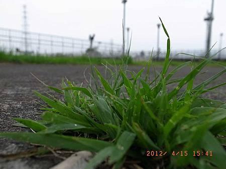 20120415土城堤邊公園風景試拍06(001)