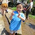 20150406竹子湖拔海芋16.jpg