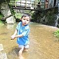 20150406竹子湖拔海芋21.jpg