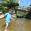 20150406竹子湖拔海芋19.jpg