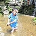 20150406竹子湖拔海芋20.jpg
