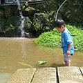 20150406竹子湖拔海芋23.jpg