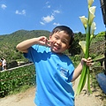 20150406竹子湖拔海芋31.jpg